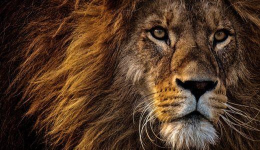 predator  捕食者、補食動物、肉食動物