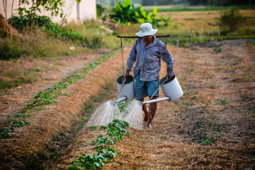 農業(Agriculture)に関する英単語まとめ 画像と意味