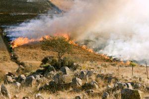 the slash-and-burn method