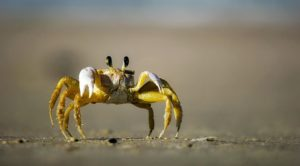 crabwise