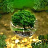 生態学(Ecology)の英単語・熟語まとめ