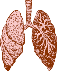 pulmonary artery